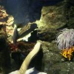 aquario di Genova